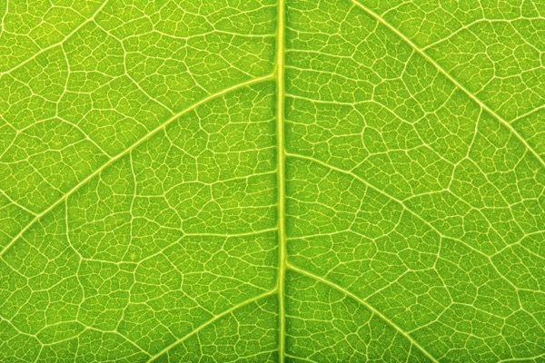Green leaf detail — preview
