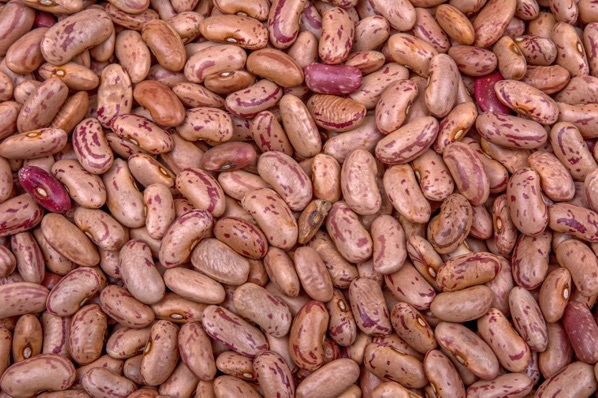 Kidney beans — preview