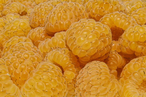 Yellow raspberries — preview