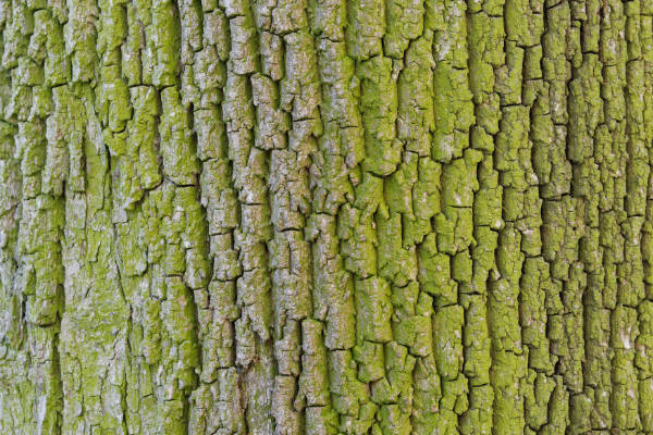 Tree bark — preview